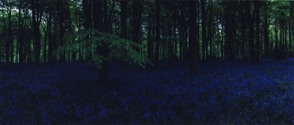 Blue Hour, Untitled 2, 2005