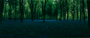 Blue Hour, Untitled 5, 2006