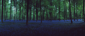 Blue Hour, Untitled 7, 2006